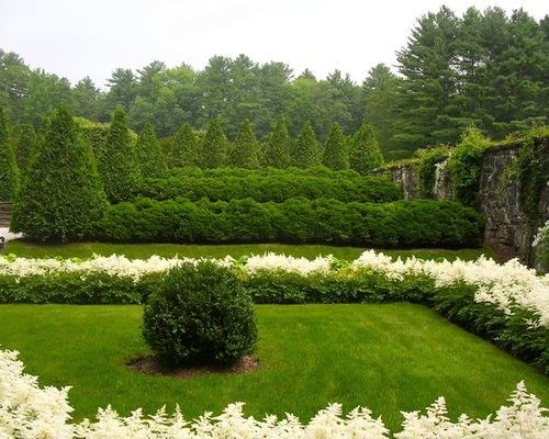 Превосходное сочетание белой Астильбы с зеленым садом