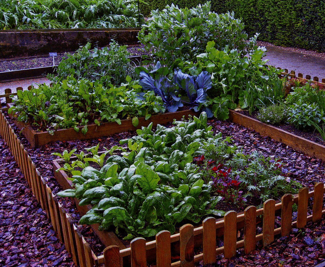 Индивидуальный декоративный огород в ландшафтном дизайне