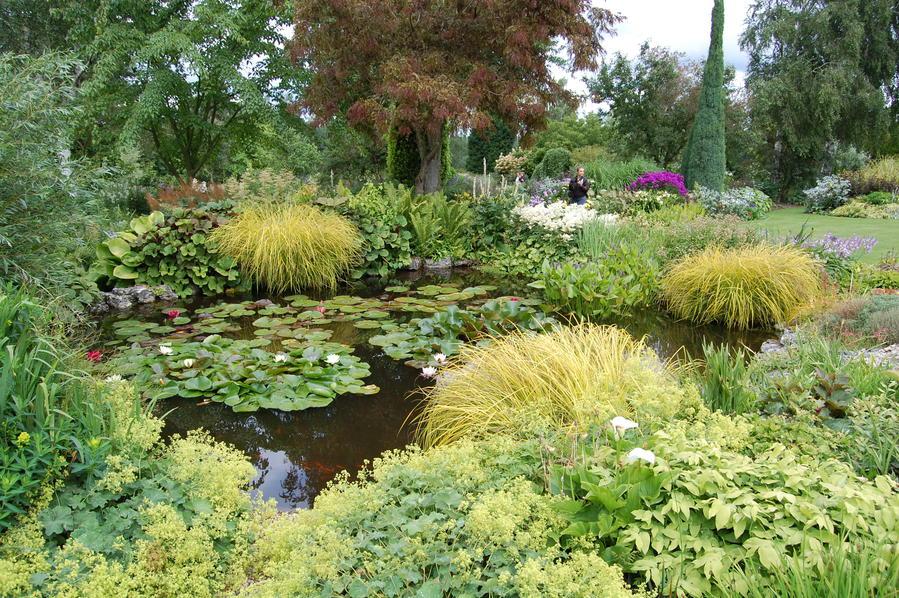 Оформление прудика кувшинками и декоративными растениями в английском стиле