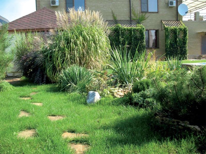 Пример оформления сада декоративными злаками