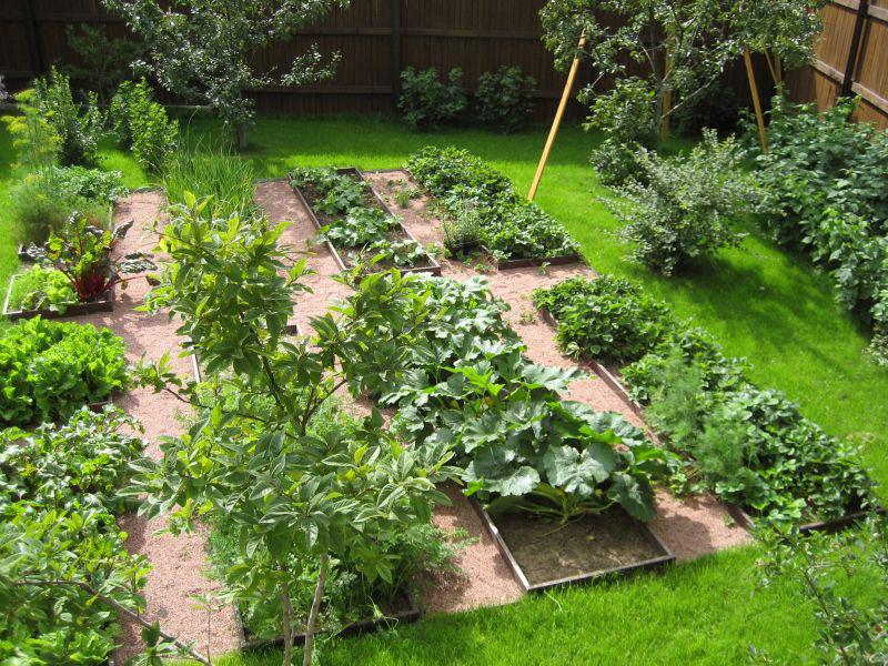 Правильное сочетание овощей в огороде