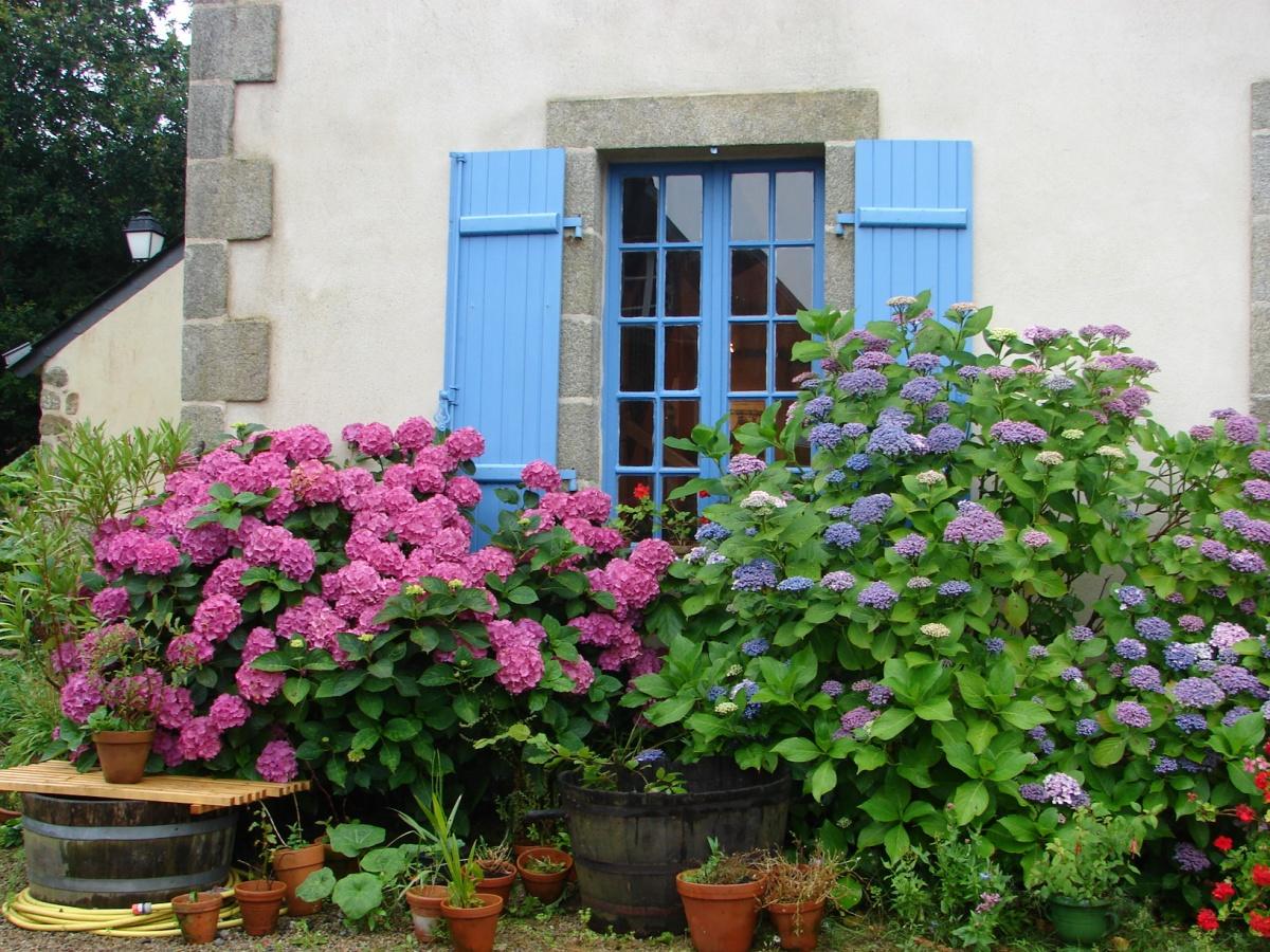 Гортензии могут придать окну приятный вид