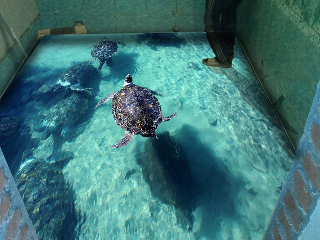 3d пол с черепахами