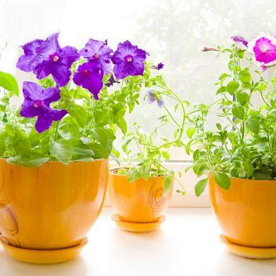 Цветы в доме по фен-шуй фото