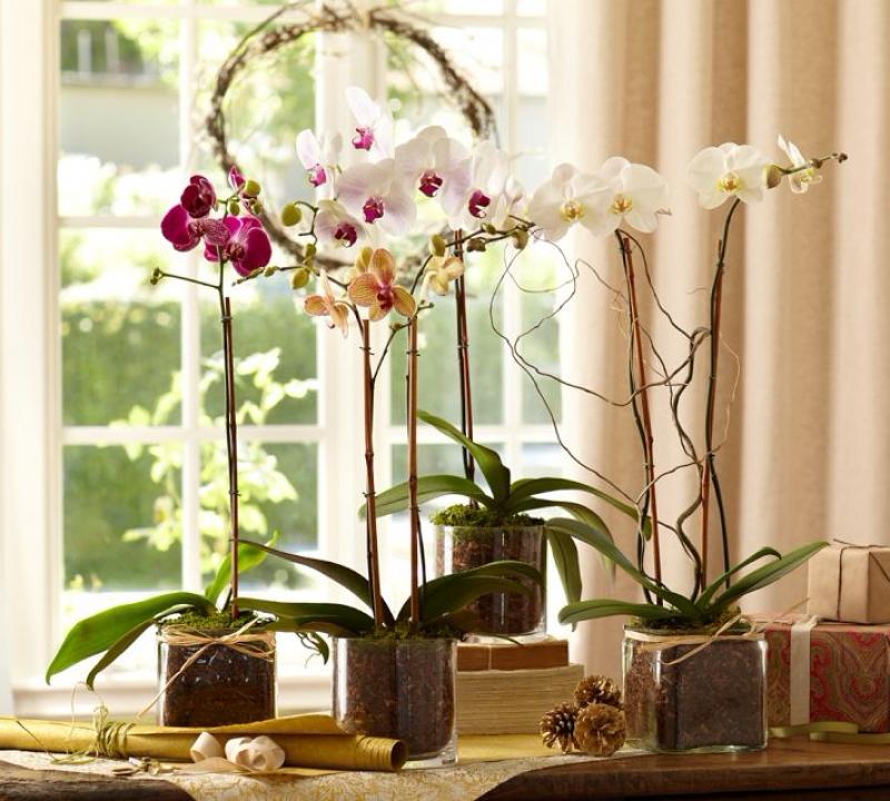 Орхидея по фен-шуй в спальне