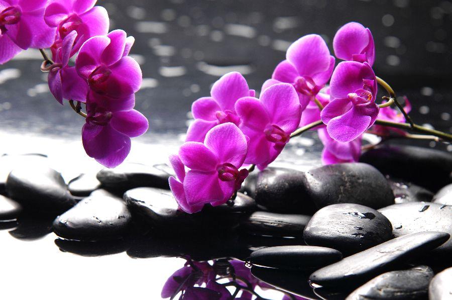 Цветы фен шуй