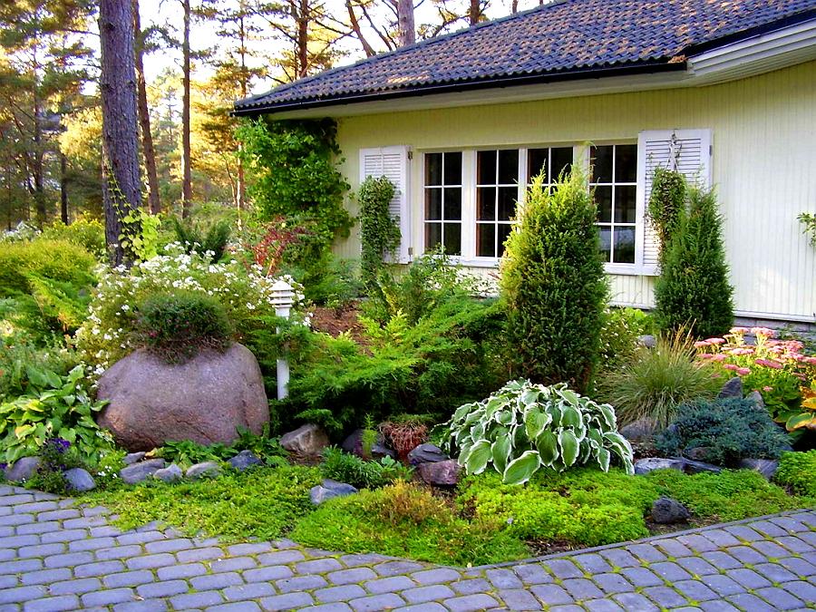 Украшение дачного участка декоративными кустарниками