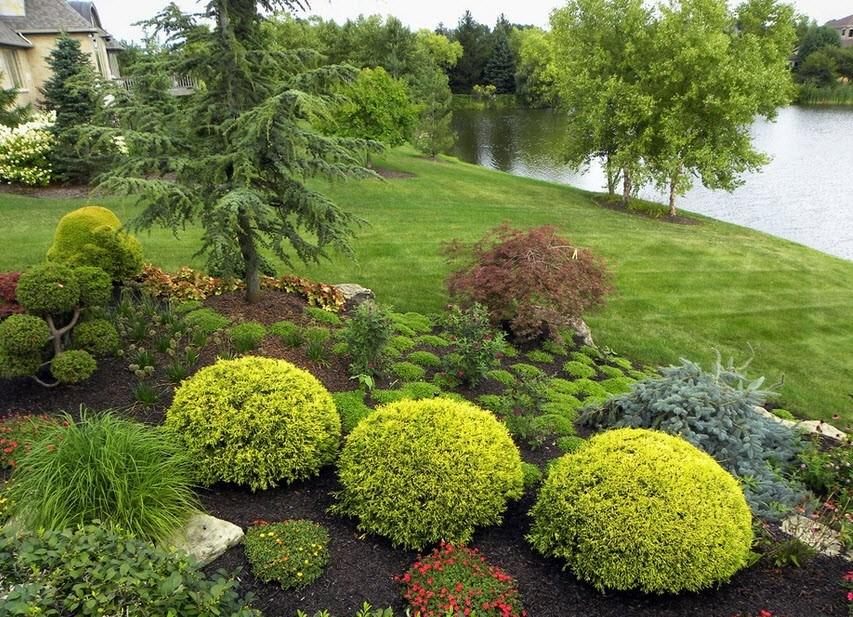 Использование в ландшафтном дизайне кустов с шарообразной формой