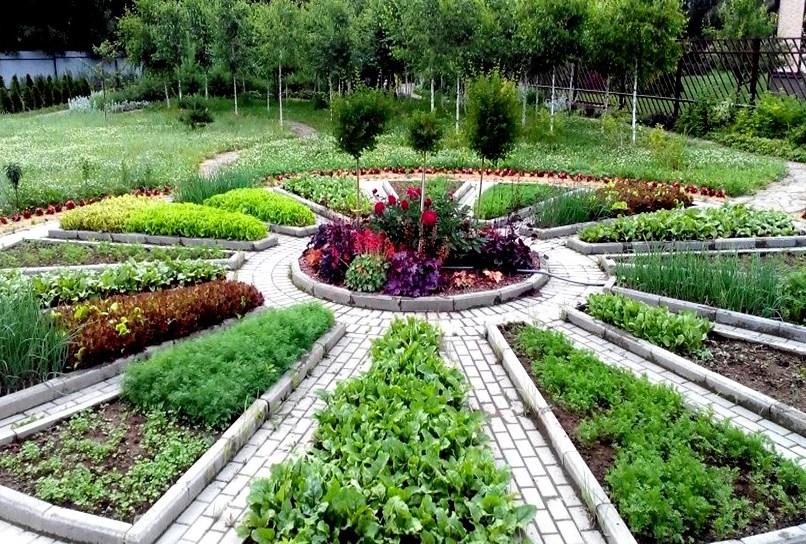 Декоративный огород в начале лета