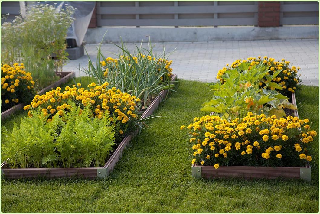 Ровные грядки с ярко жёлтыми цветами на зелёной лужайке