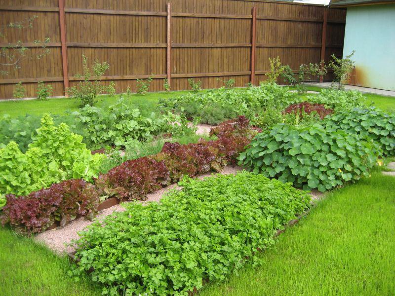 Грамотно оформленный в ландшафтном дизайне декоративный огород