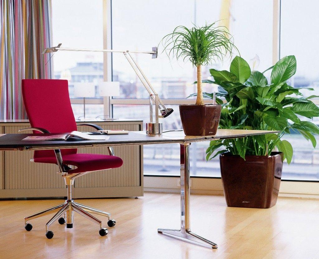 Живые цветы будут уместны в любом кабинете