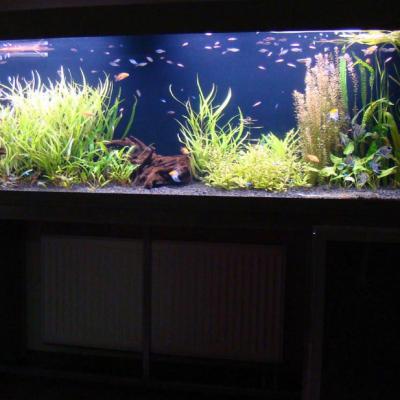 Аквариум с растениями