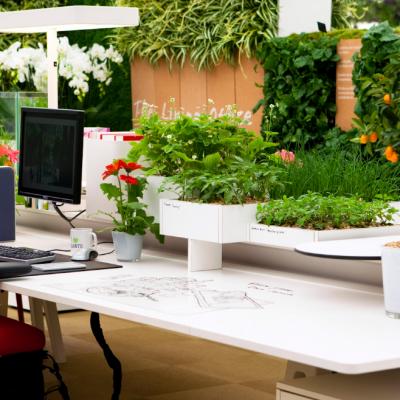 Обилие растений в офисе