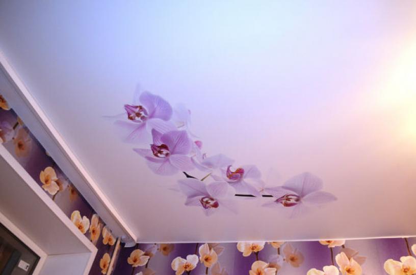 варианты картинок орхидеи для натяжных потолков нижним подключением