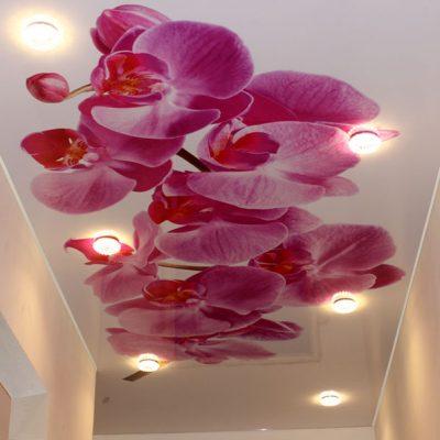 Потолки с орхидеями